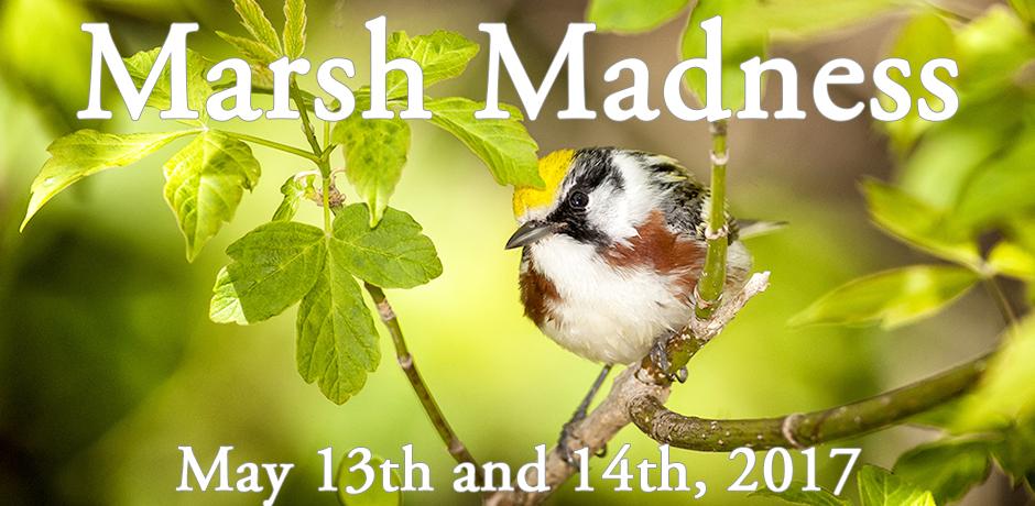 Marsh Madness 2017