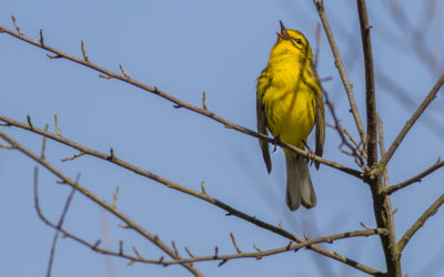 Lake Hope State Park Bird Walk – June 10