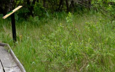 Cedar Bog Nature Center Bird Walk – May 26