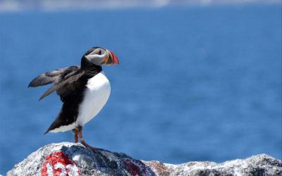 Young Birder, Adriana Losey, Reports on Hog Island