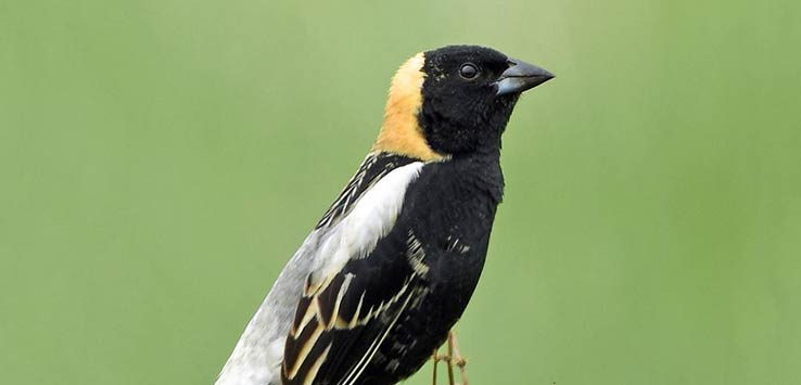 2019 Bird Walk – May 18 – Lorain County Special Access