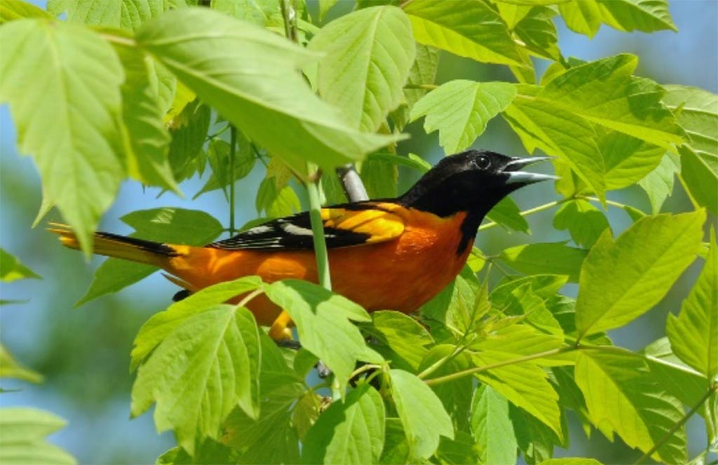 2019 Bird Walk – May 25 – Spring Valley Wildlife Area