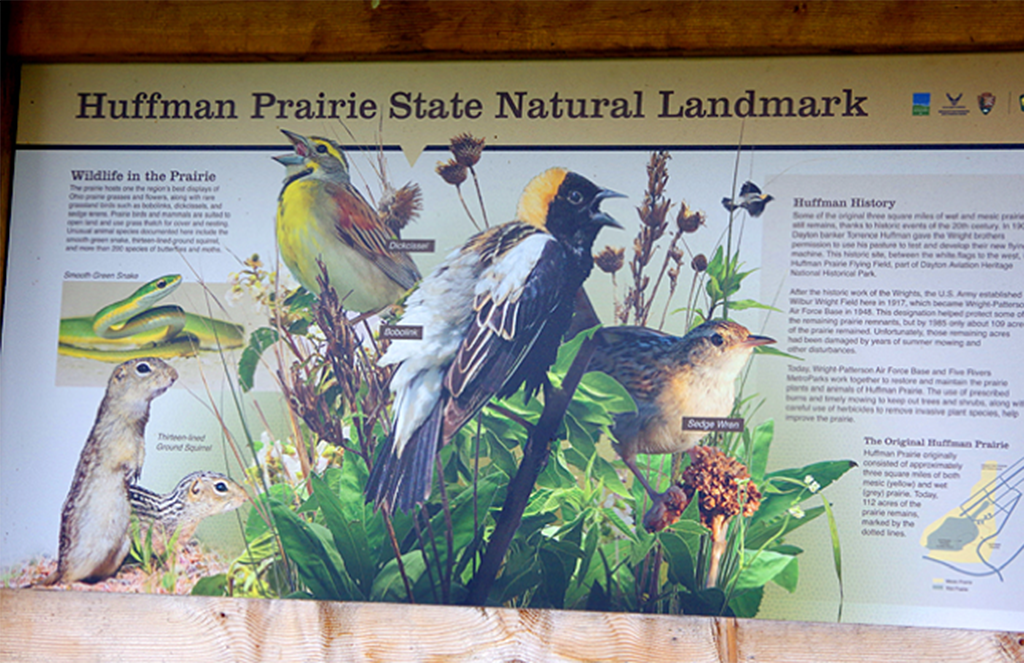 2019 Bird Walk – July 20 – Huffman Prairie Flying Field (Dayton, Greene County)