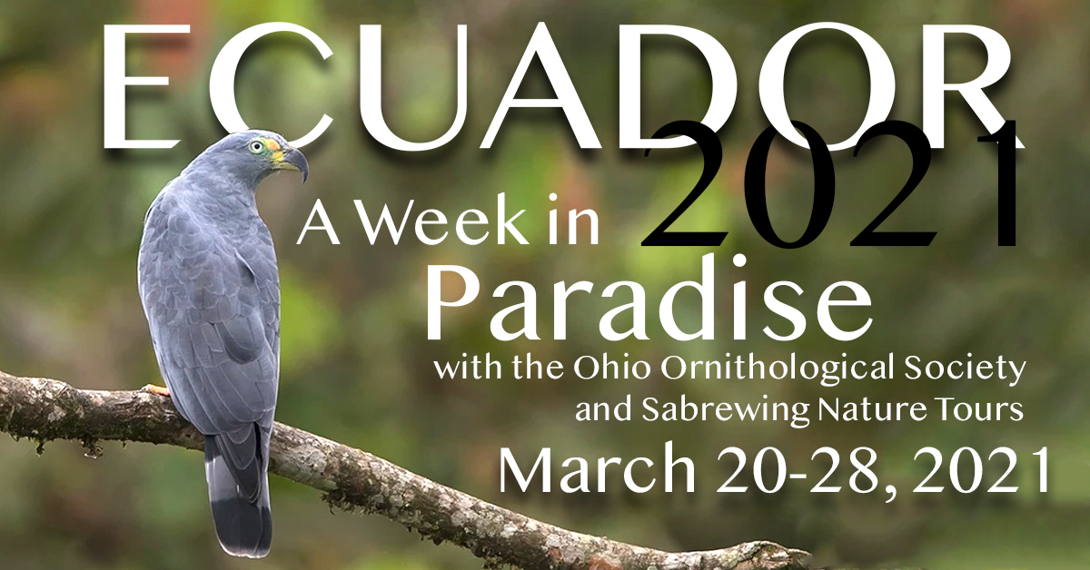 Birding Ecuador with the OOS in 2021!