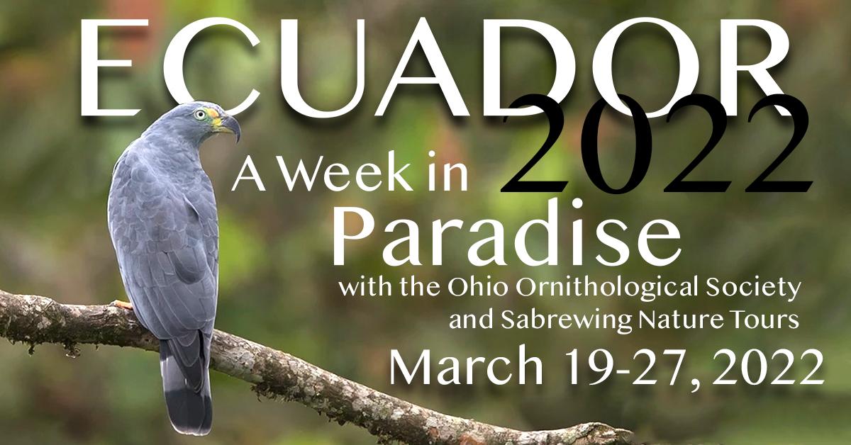 Birding Ecuador with the OOS in 2022!