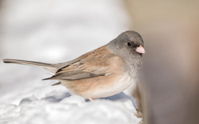 Where We Are Birding – February